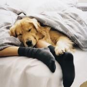 4 saveta da Vaša spavaća soba postane oaza za miran san
